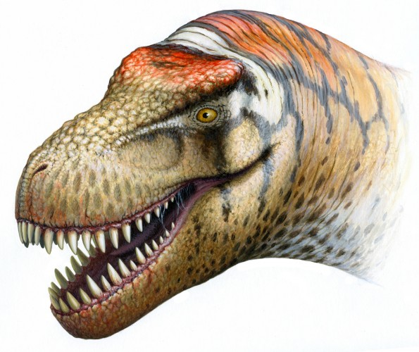 Reconstruction of Zhuchengtyrannus magnus by Bob Nicholls (used with permission).